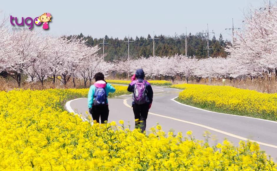 Đảo Jeju đầy thơ mộng và yên bình