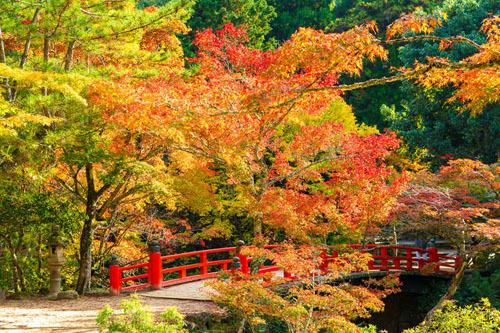Nhật Bản là một trong những nơi có mùa thu đẹp nhất thế giới. Đó cũng là lý do nhiều du khách thích đến Nhật vào mùa này. Ảnh: Tsunagu Japan.