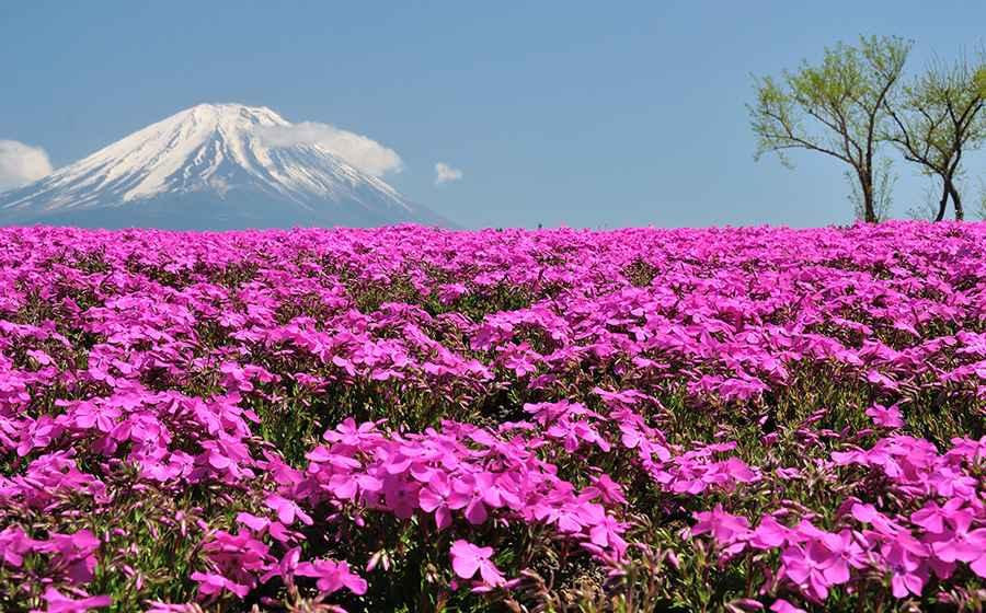 TOUR NHẬT BẢN 5N5D: TOKYO-YAMANASHI-FUJI MOUNT-NIKKO–NARITA (CUNG ĐƯỜNG KIM CƯƠNG)