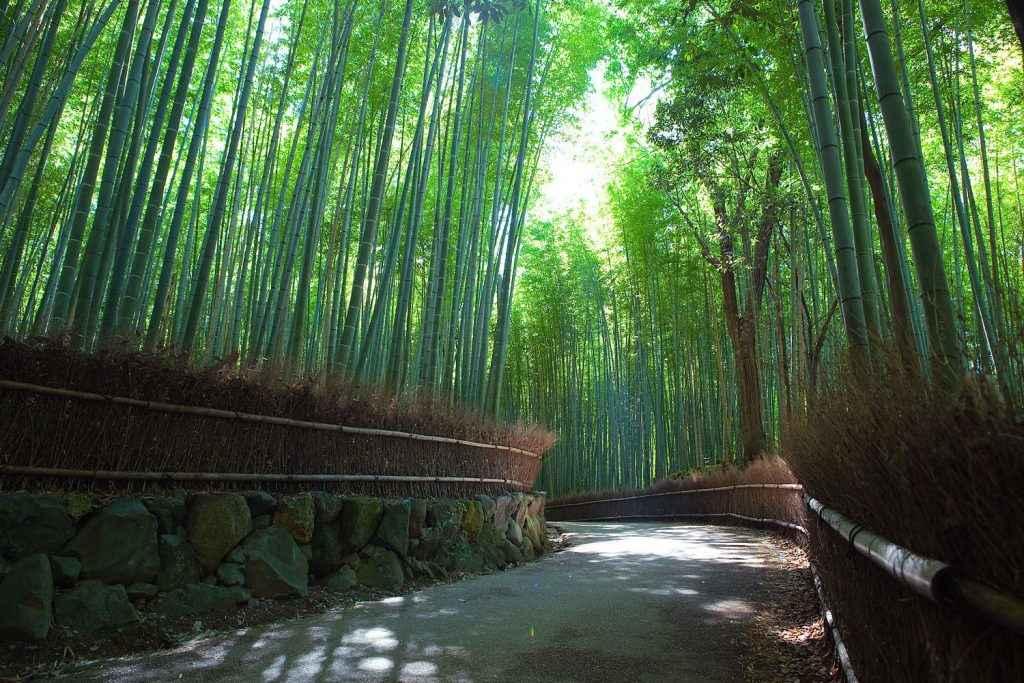 TOUR NHẬT BẢN 4N4D (HÀ NỘI): NAGOYA–HAKONE–FUJI MOUNT–TOKYO-UENO PARK–NAGOYA 4N4Đ (TG)