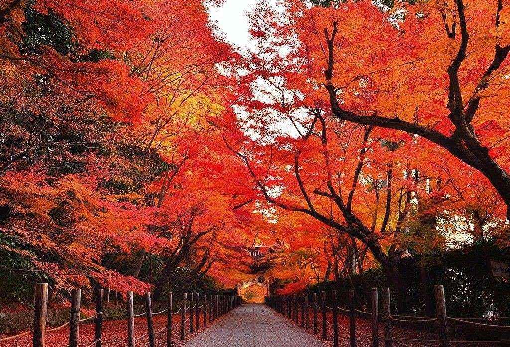 Mùa lá đỏ ở Nhật Bản
