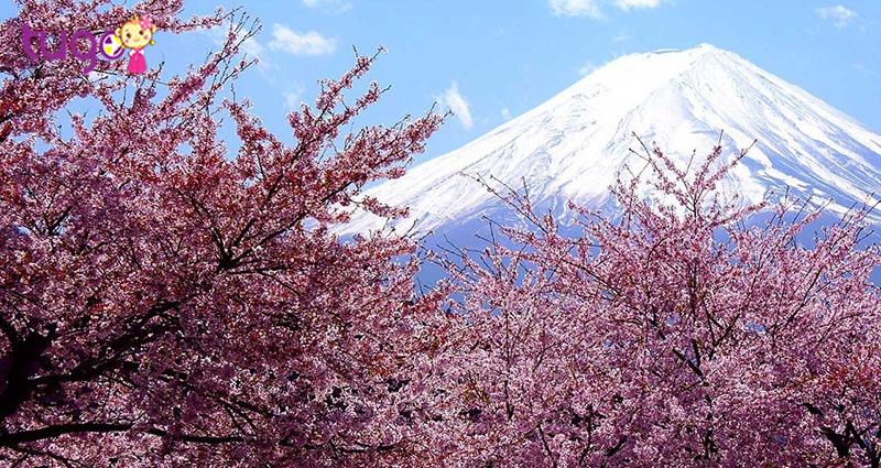 Hoa Anh Đào là nét đặc trưng của Nhật Bản