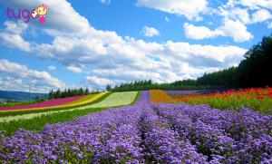 Mùa hè là khoảng thời gian vô cùng thích hợp để du ngoạn Nhật