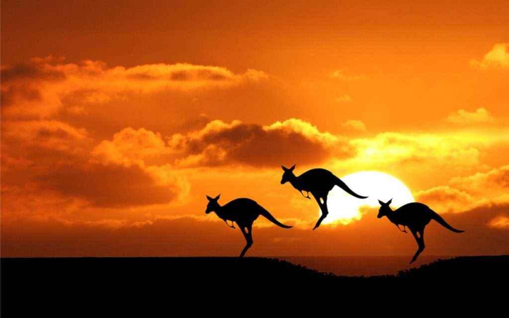 Những món quà nhất định phải mua khi đi du lịch nước Úc