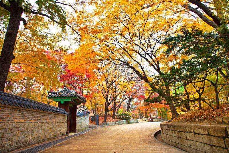 Hàng cây lá đỏ ven đường tạo nên một bức tranh tuyệt đẹp