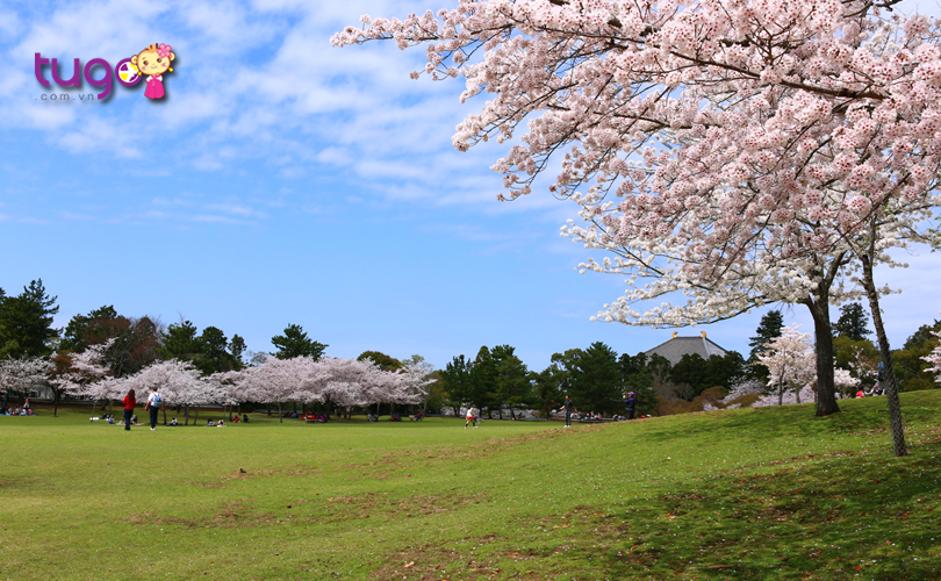 Bầu không khí yên tĩnh, trong lành ở công viên Nara