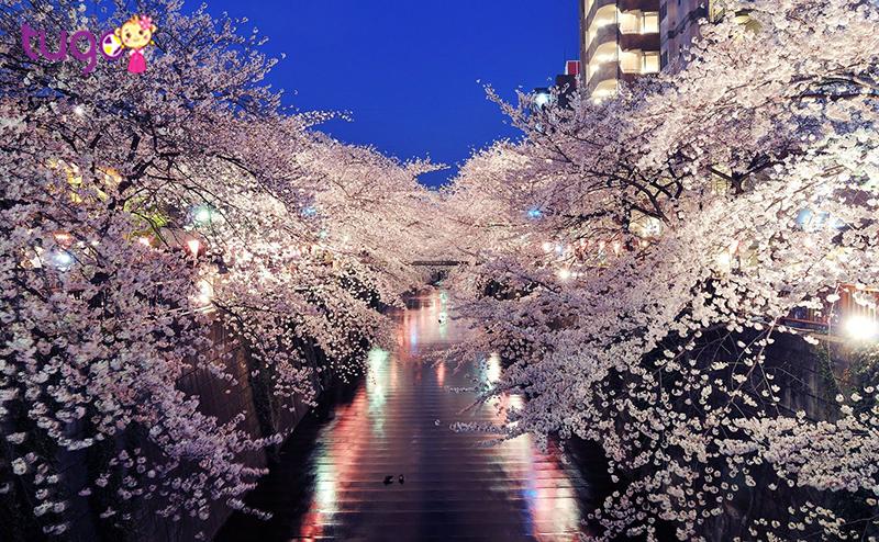 Vườn quốc gia Shinjuku Gyoen sẽ cho bạn chiêm ngưỡng thiên đường thật sự
