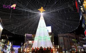 Cây thông khổng lồ được trang trí bắt mắt ở thành phố Busan vào dịp Noel