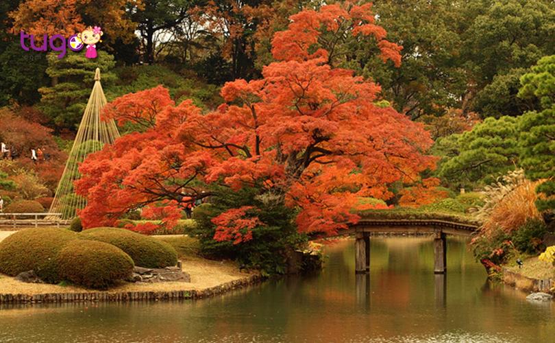 Công viên Rikugien, Tokyo chính là địa điểm ngắm mùa thu tuyệt vời mà du khách rất nên ghé thăm khi du lịch Nhật Bản tháng 10