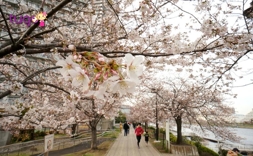Cảnh sắc mùa xuân quyến rũ tại đất nước Nhật Bản