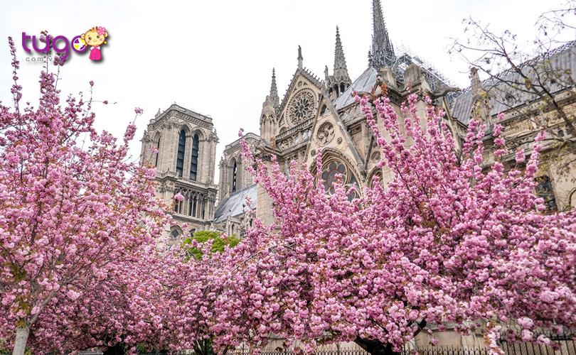 Cảnh sắc mùa xuân tuyệt đẹp ở thủ đô Paris