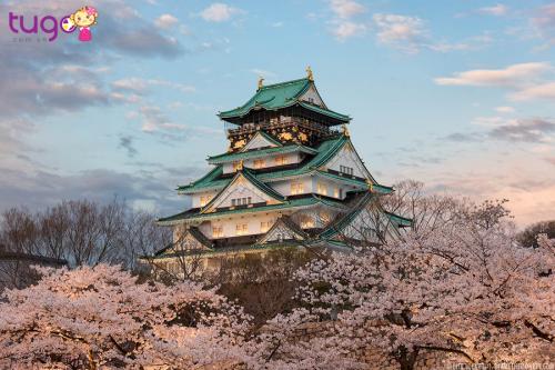 TOUR NHẬT BẢN 5N5D (HÀ NỘI):NAGOYA-SHIRAKAWA GO-TAKAYAMA-NÚI PHÚ SĨ- TOKYO-UENO PARK–6N5Đ-BAY VNA (TG)