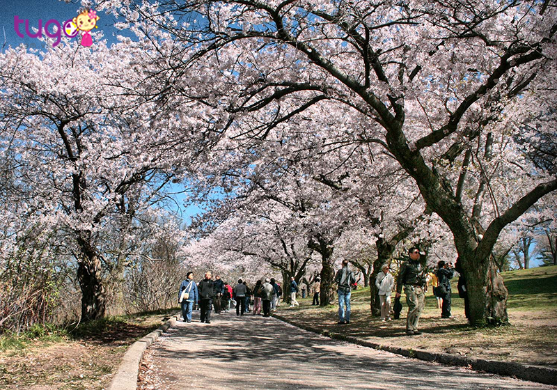 Công viên High với con đường đầy hoa