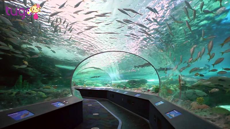 Thủy cung tại Toronto Canada thu hút khách du lịch