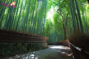 Con đường xuyên rừng trúc tuyệt đẹp