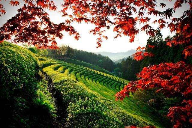 Sớm tinh mơ ở Boseong