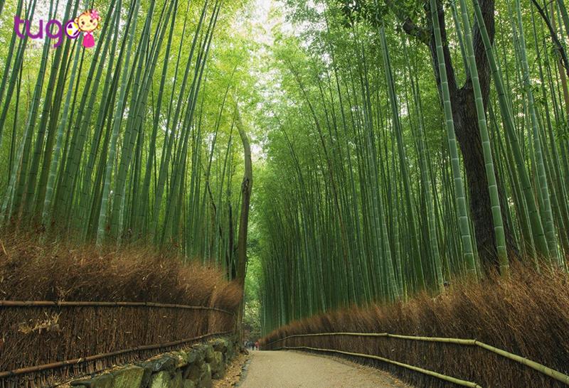 Con đường xuyên rừng tre tuyệt đẹp với những bản nhạc du dương khi gió thổi vào rặng tre rì rào