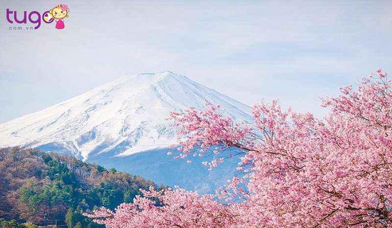 Mùa xuân Nhật Bản nổi tiếng với những sắc hoa rực rỡ, đặc biệt là hoa anh đào.