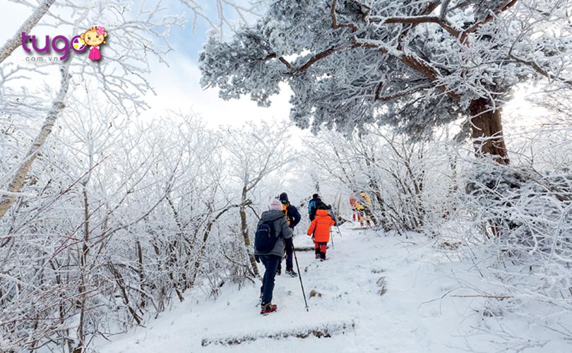 Gangwon - Thiên đường của những hoạt động dành cho mùa đông không thể bỏ lỡ