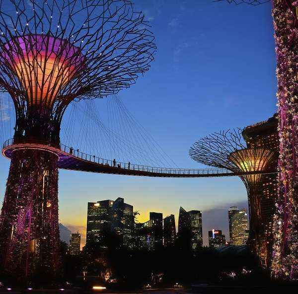 Những cây khổng lồ với chiều cao 25 - 30m, có chức năng thu năng lượng mặt trời và phát sáng vào ban đêm.