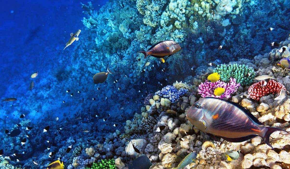 Vẻ đẹp từ rạn san hô của Great Barrier Reef