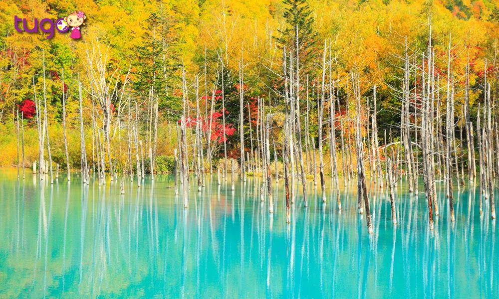 Hồ xanh sông Bieigawa