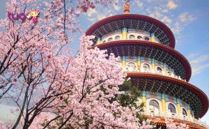 Hoa anh đào khoe sắc rực rỡ ở chùa Wuji Tianyuan