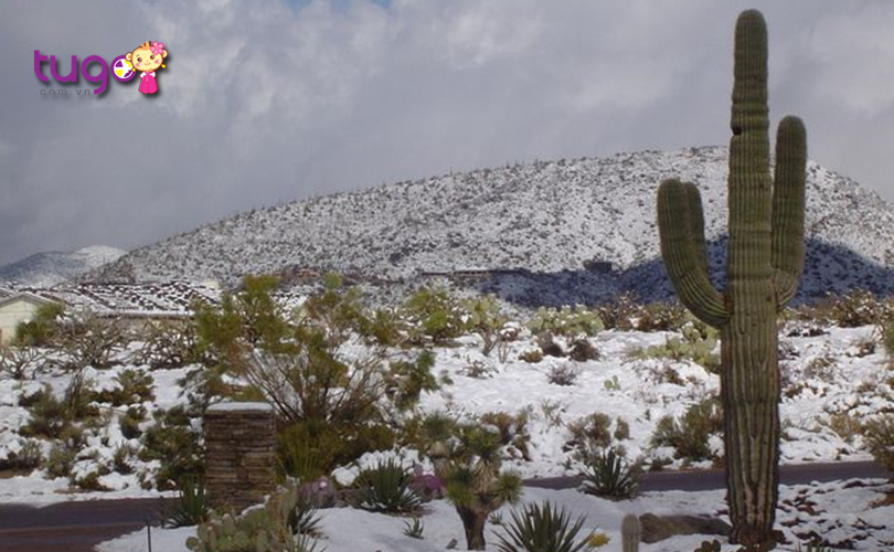 Khung cảnh mùa đông ấn tượng tại Scottsdale, Arizona