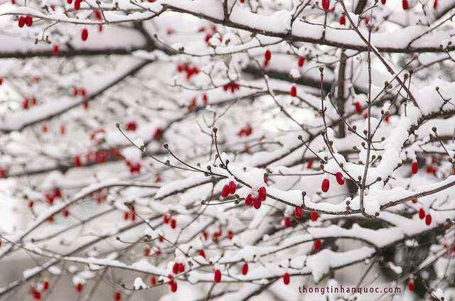 Korea winter 3