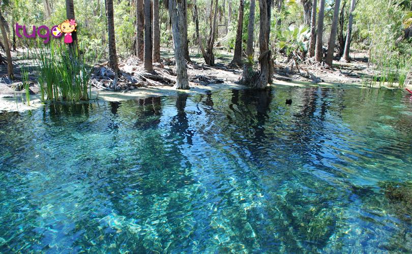 Làn nước trong veo tuyệt đẹp của suối Bitter Springs