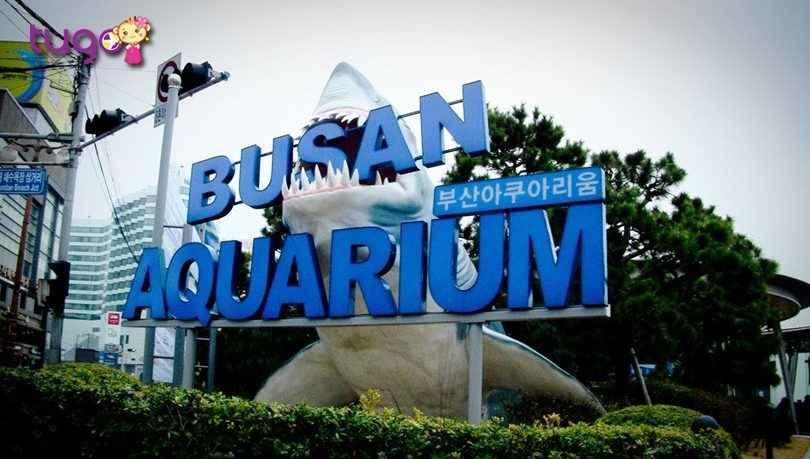 lac-loi-giua-dai-duong-tai-vien-hai-duong-busan-aquarium