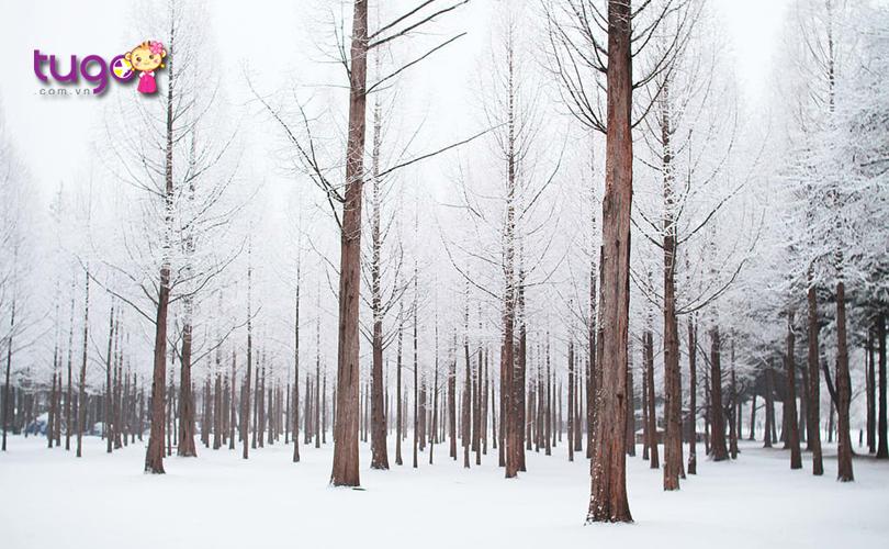 Màn tuyết trắng xóa bao phủ khắp mọi nơi khi mùa đông về