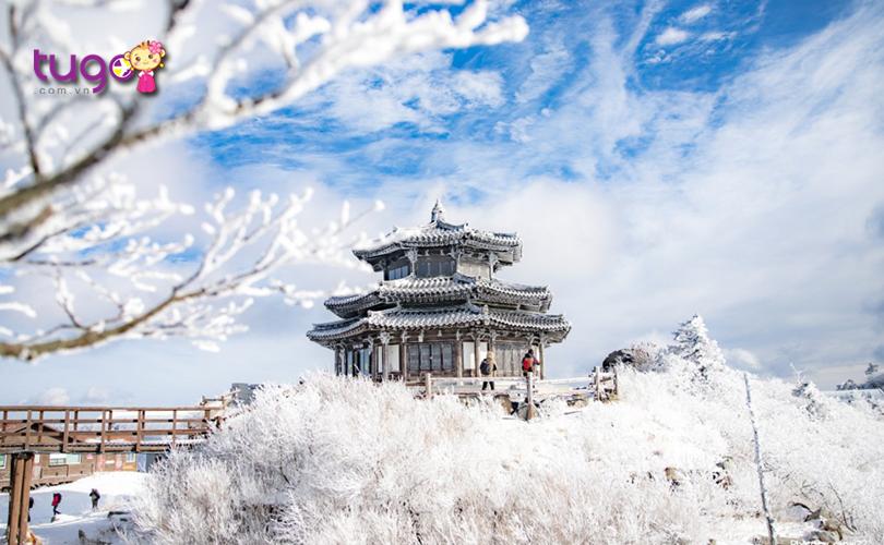 Màu trắng xóa của tuyết bao phủ khắp nơi vào mùa đông ở Hàn Quốc