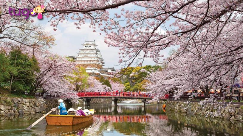 Mùa xuân là khoảng thời gian lý tưởng để du lịch Nhật Bản