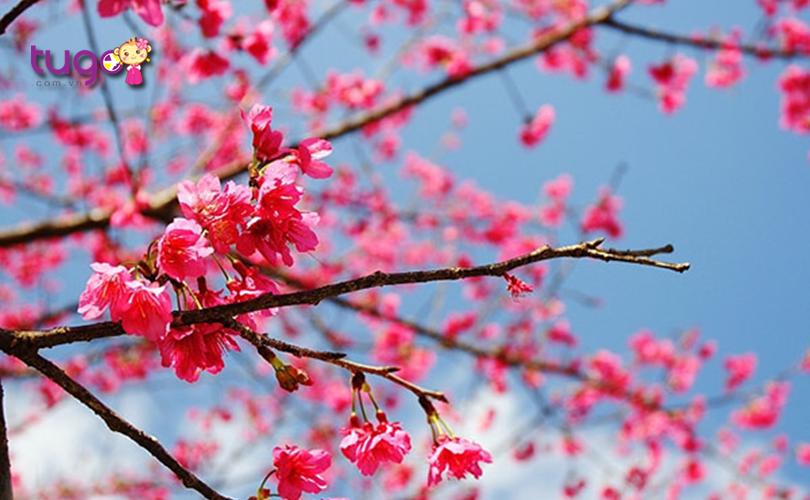 Mùa xuân là thời điểm lý tưởng để khám phá các cảnh đẹp nổi tiếng ở Đài Loan