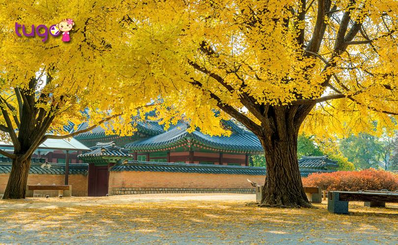 Nên ghé thăm những địa điểm nào khi du lịch Hàn Quốc tháng 11?