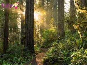 Công viên quốc gia Redwood