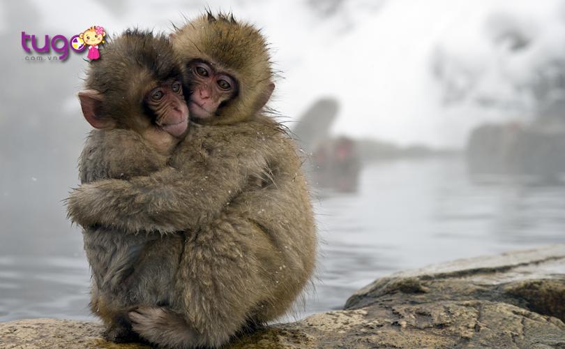 Những chú khỉ đáng yêu sưởi ấm ở Jigokudani Onsen vào mùa đông