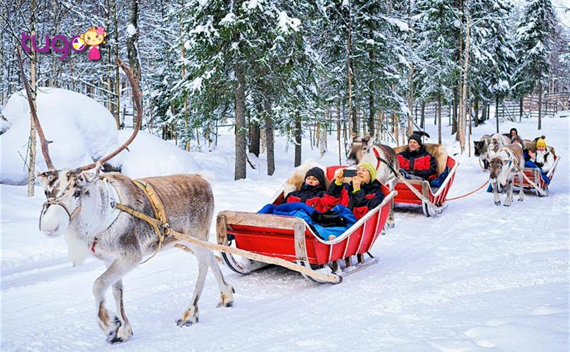 Những chiếc xe trượt tuyết với tuần lộc đầy độc đáo ở Rovaniemi
