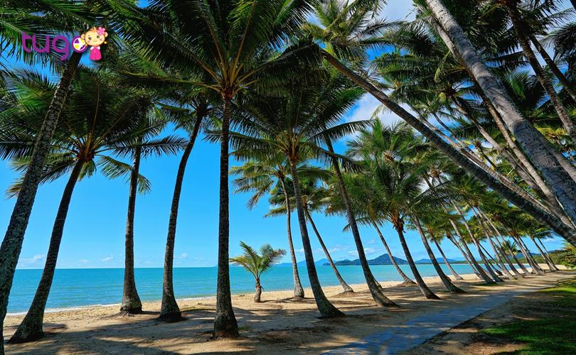 Những hàng dừa xanh mát bên bãi trắng trắng mịn tại bãi biển Palm Cove