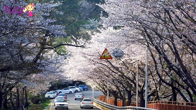 Những lý do níu chân du khách khi đến Busan vào mùa hè