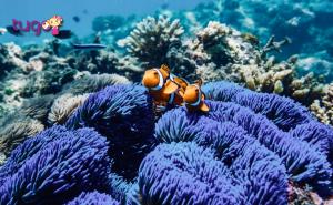 Những rạn san hô đầy màu sắc ở Great Barrier