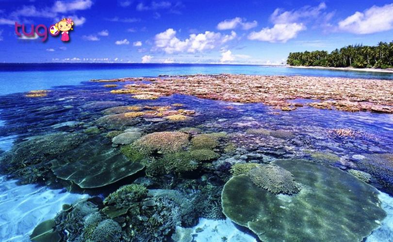 Những rạn san hô lung linh đầy màu sắc ở bãi san hô Koh Larn