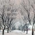 """Những tán cây ở đảo Nami nay đã """"khoác một màu áo"""" tinh khôi khi mùa đông về"""