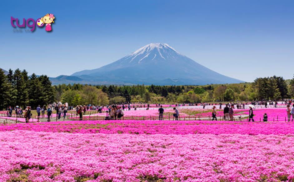 Những thảm hoa trải dài cực kỳ đẹp mắt