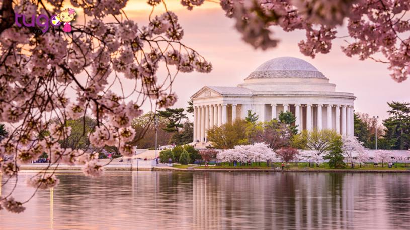Nhiều du khách thường lựa chọn tháng 3 làm thời điểm lý tưởng để khám phá nước Mỹ