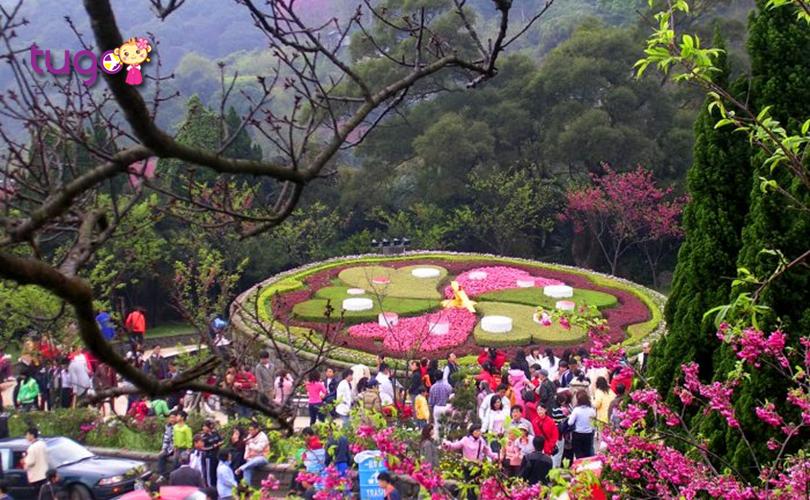 Nhiều loài hoa yêu kiều khoe sắc tại công viên Dương Minh Sơn nổi tiếng