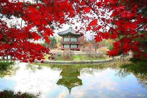 Phai long Seoul 2