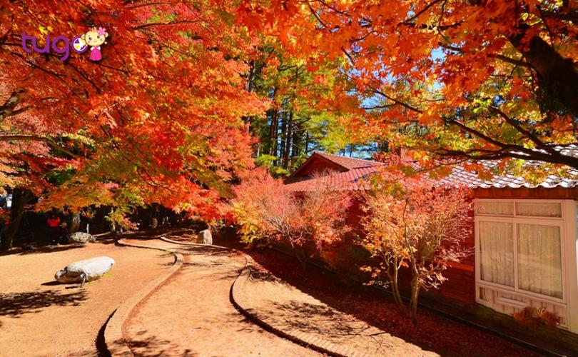 Sắc đỏ, vàng rực rỡ bao trùm cả không gian nơi trang trại Fushoushan