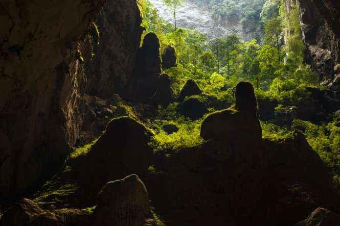 Rừng cây trong hang Sơn Đoòng - Ảnh: Ryan Doobdt